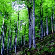 Ruta por el bosque de Valgrande