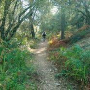 Una excursión por el barranco de Navahermosa
